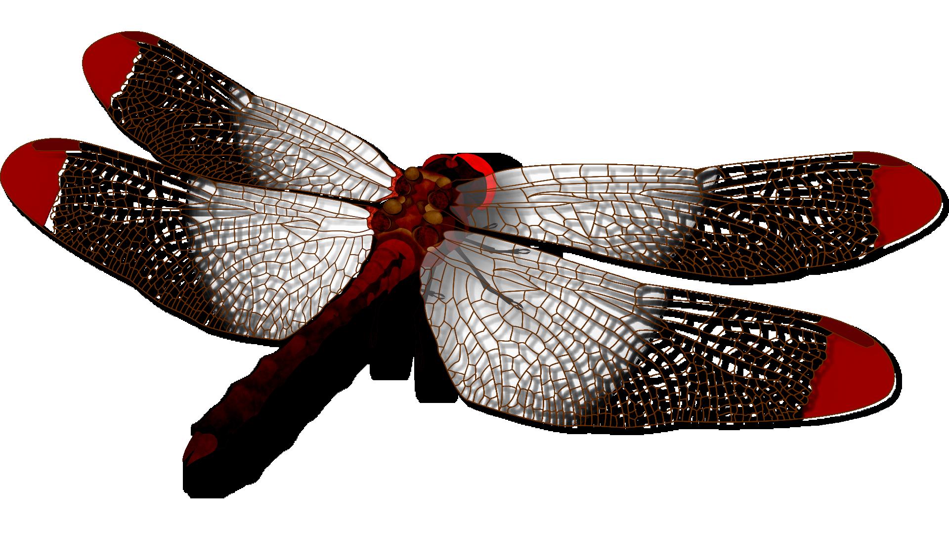 蜻蛉(トンボ) Krzm Jp